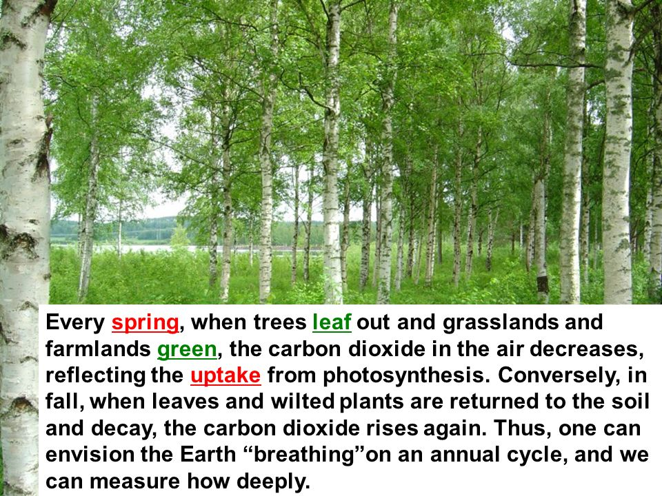 Every spring, when trees leaf out and grasslands and farmlands green, the carbon dioxide in the air decreases, reflecting the uptake from photosynthes