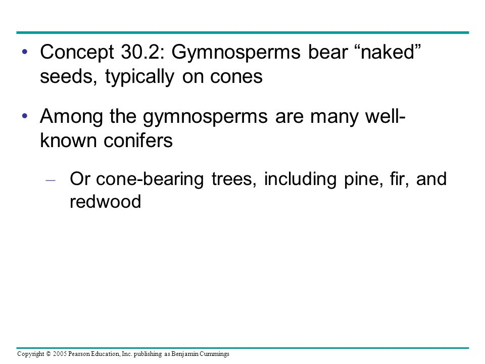 Copyright © 2005 Pearson Education, Inc. publishing as Benjamin Cummings Concept 30.2: Gymnosperms bear naked seeds, typically on cones Among the gymn