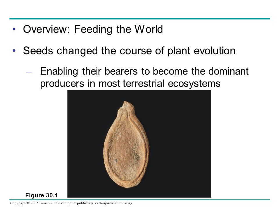 Copyright © 2005 Pearson Education, Inc. publishing as Benjamin Cummings Overview: Feeding the World Seeds changed the course of plant evolution – Ena
