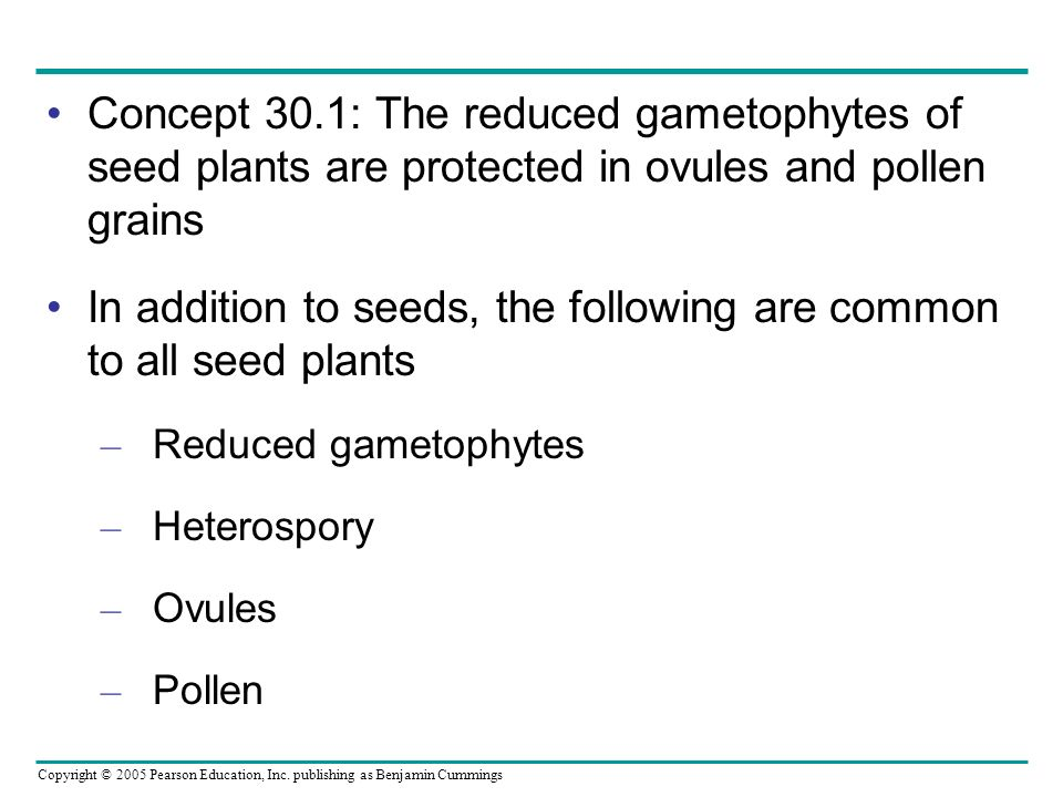 Copyright © 2005 Pearson Education, Inc. publishing as Benjamin Cummings Concept 30.1: The reduced gametophytes of seed plants are protected in ovules