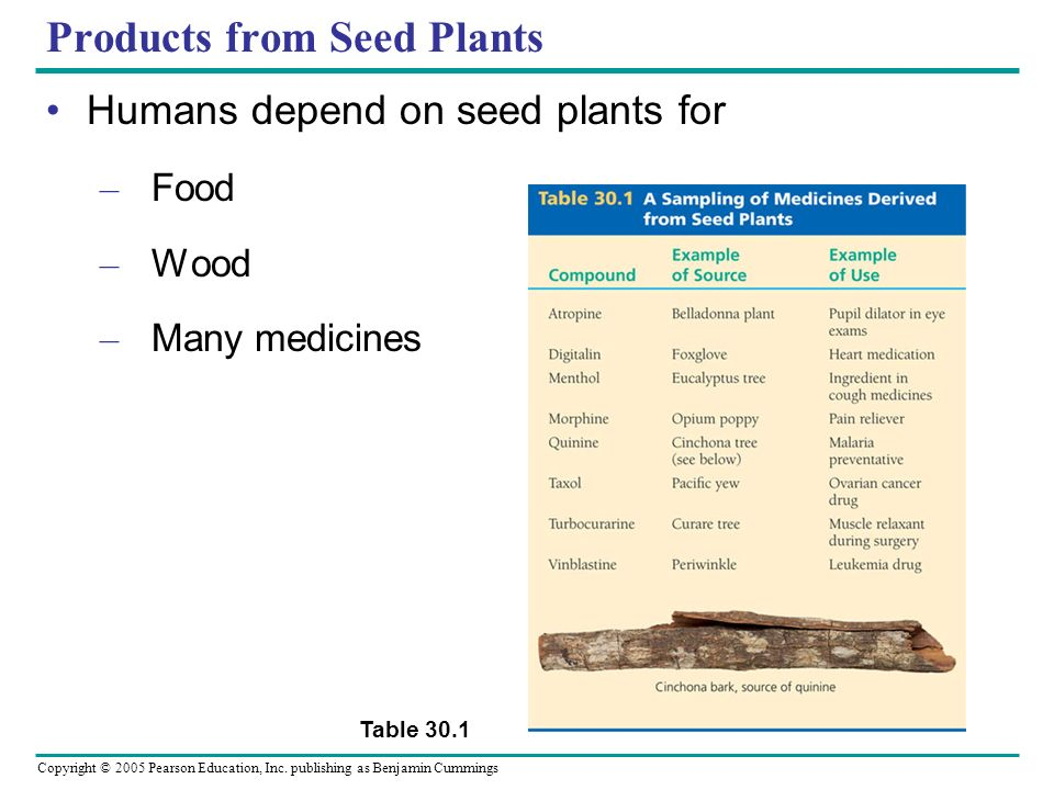 Copyright © 2005 Pearson Education, Inc. publishing as Benjamin Cummings Products from Seed Plants Humans depend on seed plants for – Food – Wood – Ma