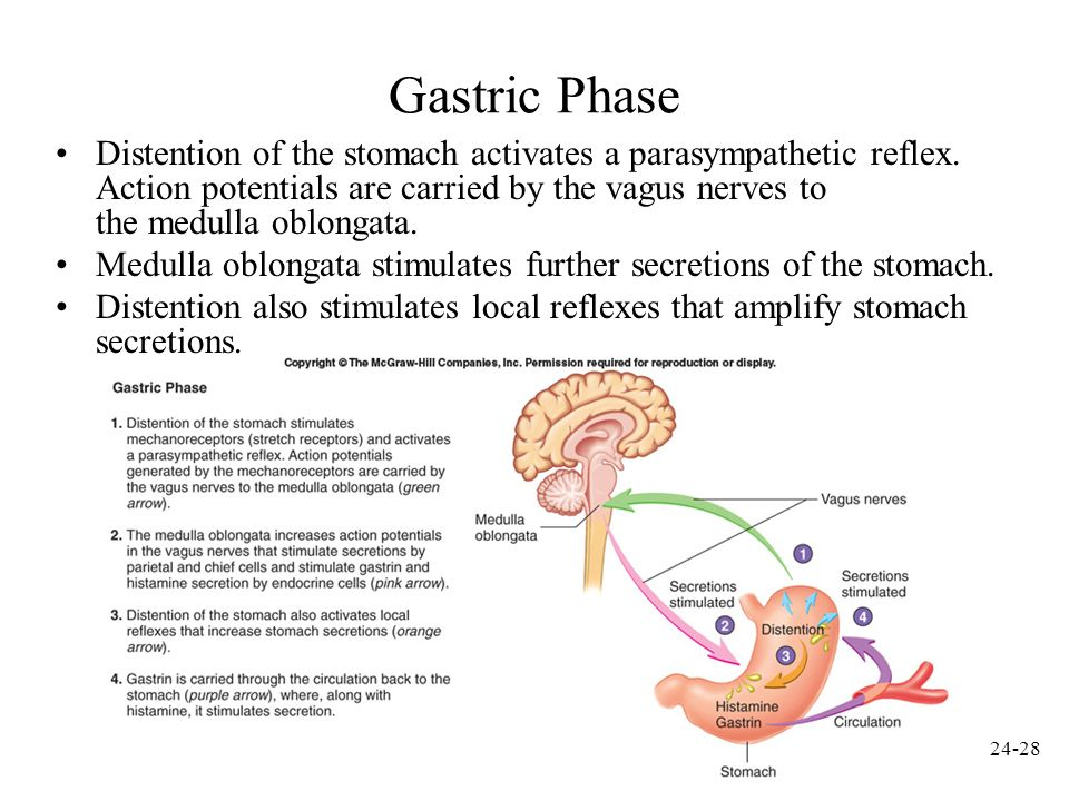 24-29 Intestinal Phase 1.Chyme in the duodenum with a pH less than 2 or containing lipids inhibits gastric secretions by three mechanisms 2.Sensory input to the medulla from the duodenum inhibits the motor input from the medulla to the stomach.
