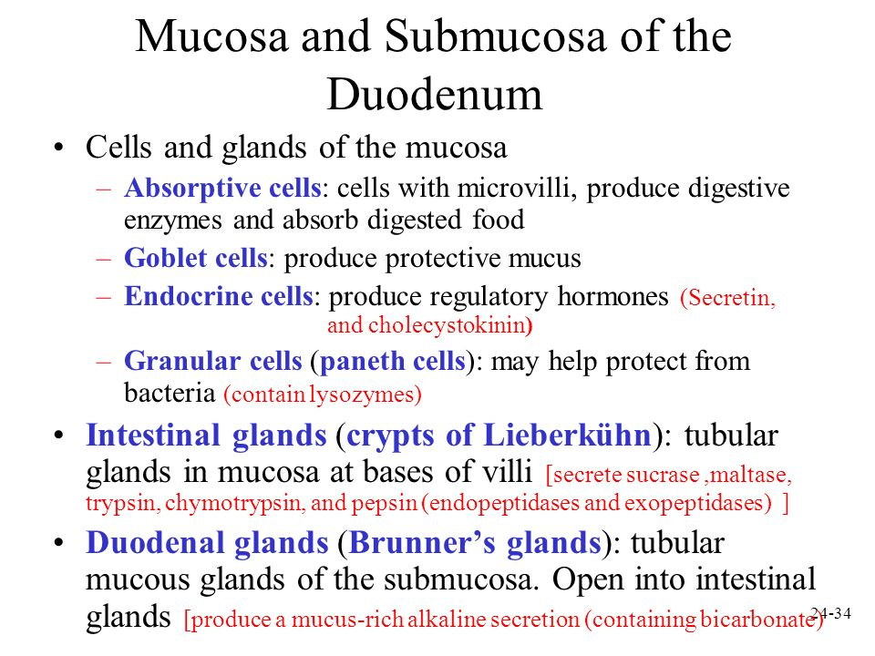 24-35 Jejunum and Ileum Gradual decrease in diameter, thickness of intestinal wall, number of circular fold, and number of villi the farther away from the stomach Major site of nutrient absorption Peyers patches: lymphatic nodules numerous in mucosa and submucosa Ileocecal junction: where ileum meets large intestine.