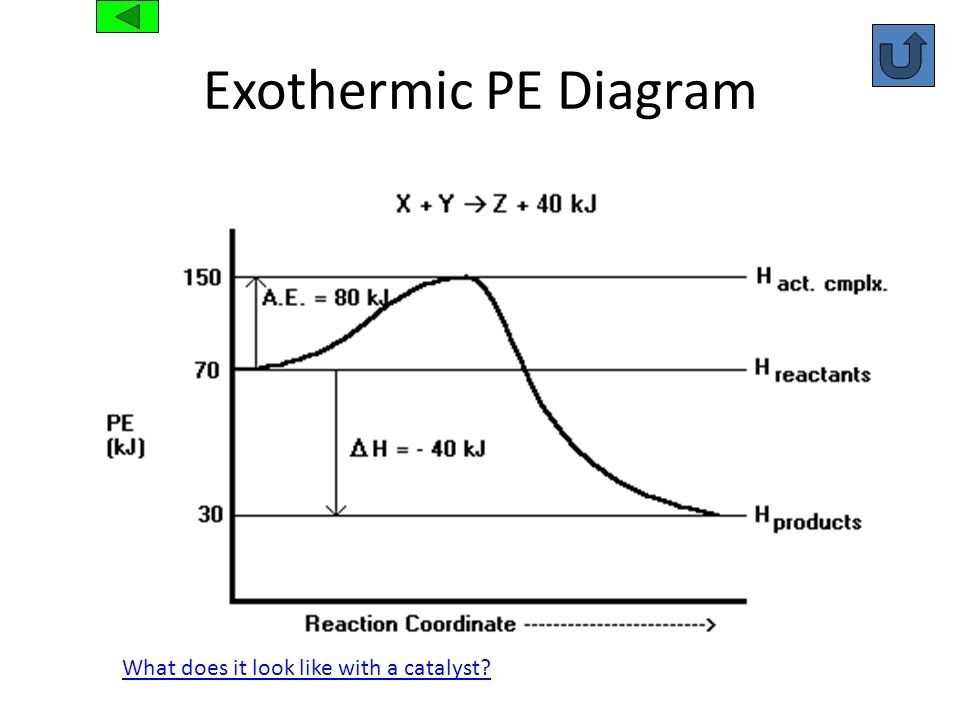 Exothermic PE Diagram What does it look like with a catalyst?