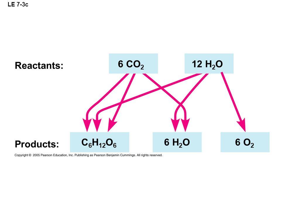 LE 7-3c Reactants: Products: 6 CO 2 12 H 2 O C 6 H 12 O 6 6 H 2 O6 O 2