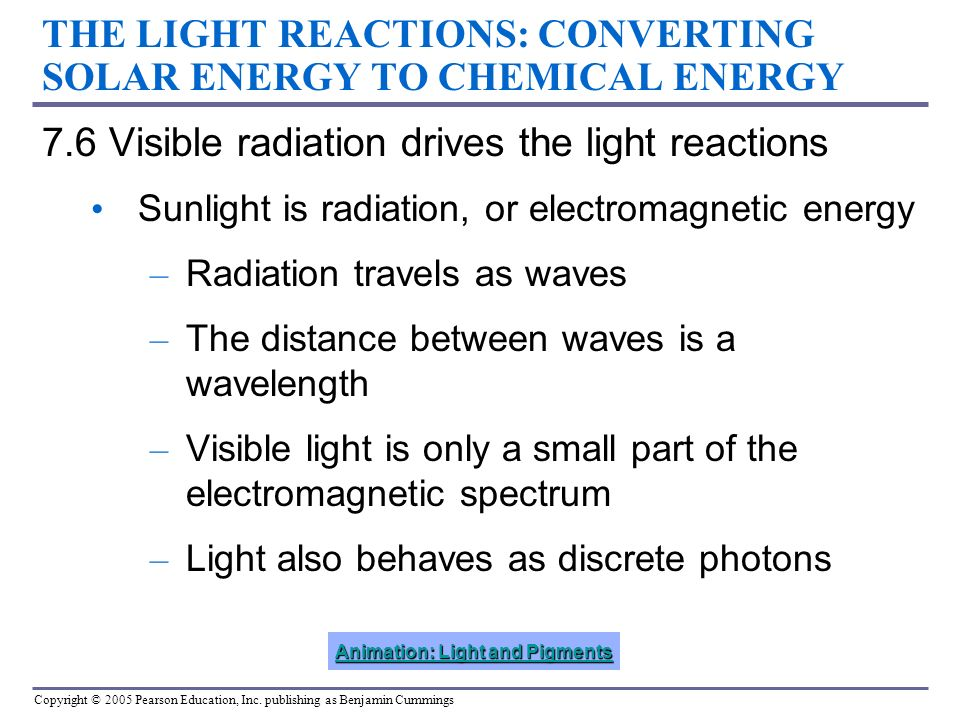 THE LIGHT REACTIONS: CONVERTING SOLAR ENERGY TO CHEMICAL ENERGY 7.6 Visible radiation drives the light reactions Sunlight is radiation, or electromagn