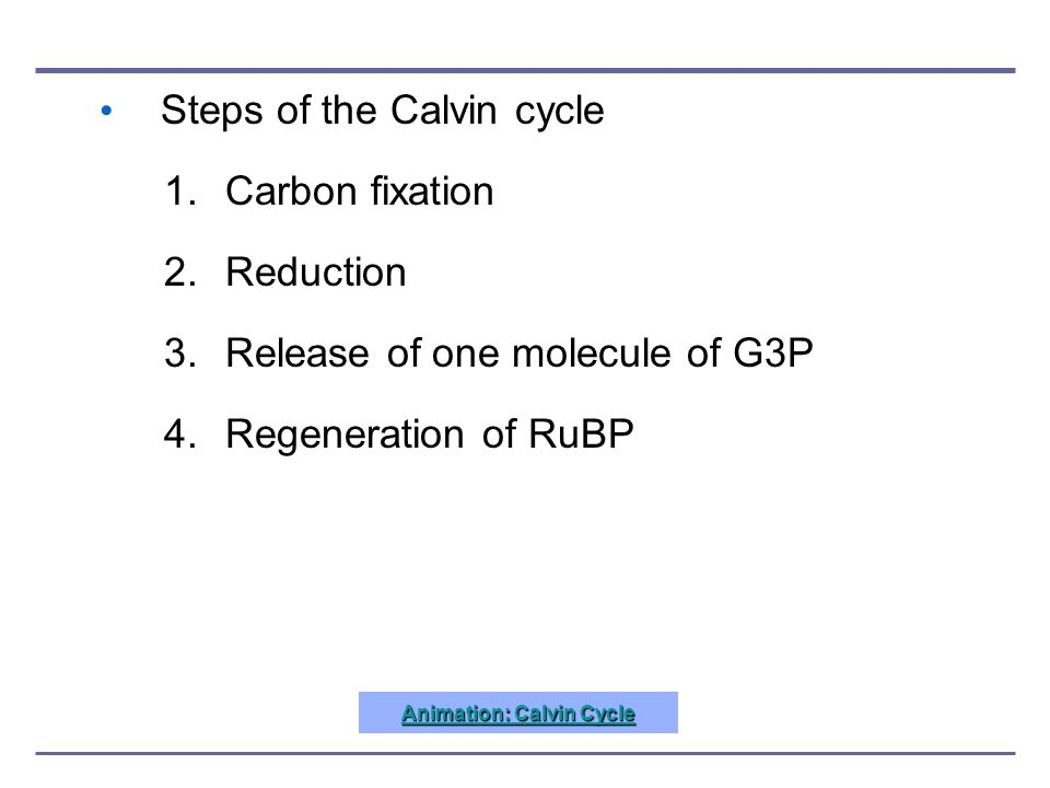 Steps of the Calvin cycle 1.Carbon fixation 2.Reduction 3.Release of one molecule of G3P 4.Regeneration of RuBP Animation: Calvin Cycle Animation: Cal