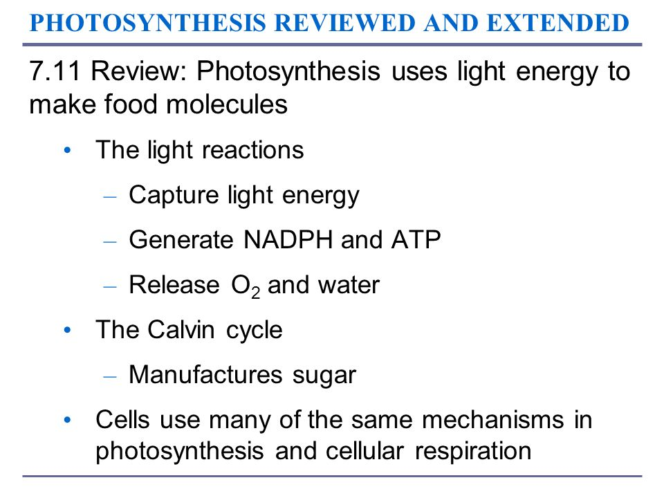 PHOTOSYNTHESIS REVIEWED AND EXTENDED 7.11 Review: Photosynthesis uses light energy to make food molecules The light reactions – Capture light energy –