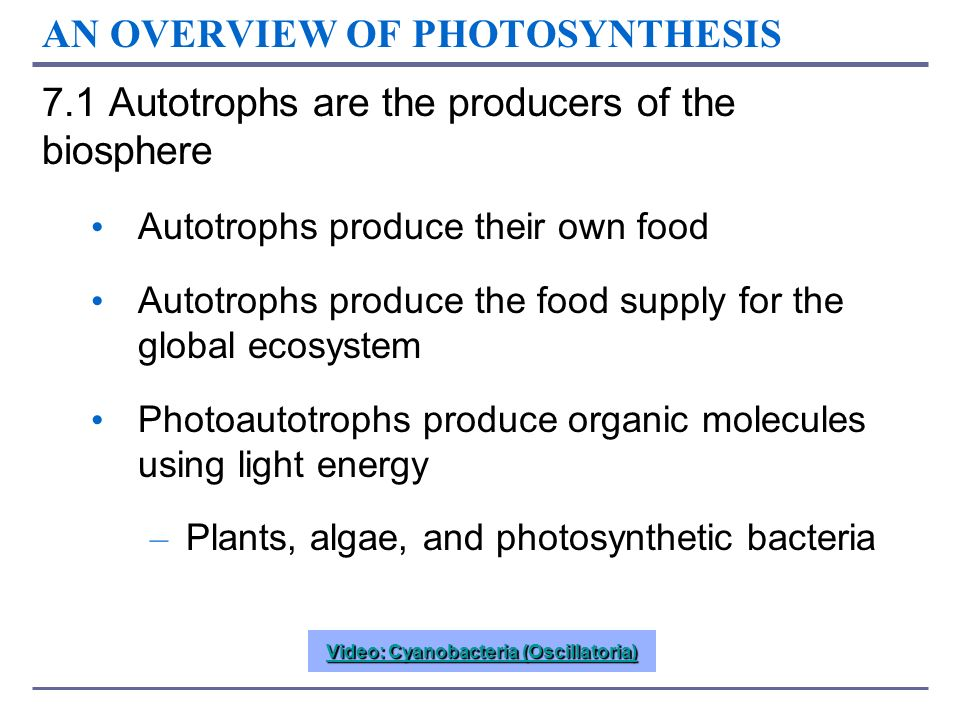AN OVERVIEW OF PHOTOSYNTHESIS 7.1 Autotrophs are the producers of the biosphere Autotrophs produce their own food Autotrophs produce the food supply f