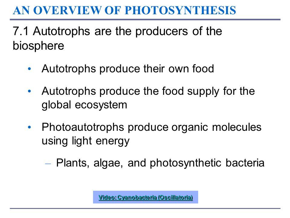 LE 7-8b Mill makes ATP NADPH Photon e–e– e–e– e–e– e–e– Photosystem IIPhotosystem I e–e– Photon e–e– e–e– ATP