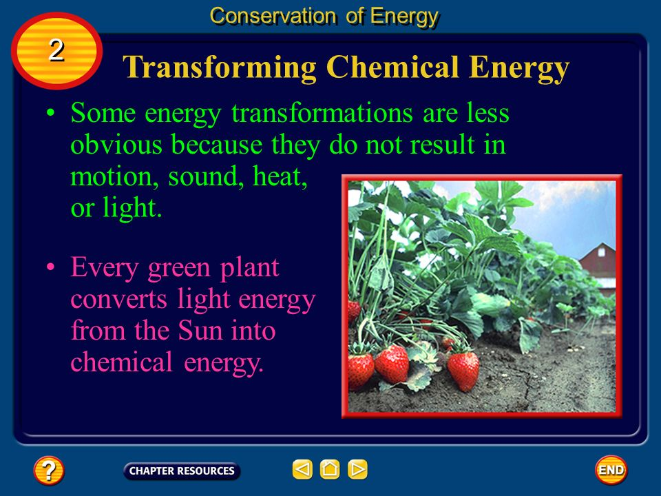Transforming Chemical Energy Conservation of Energy Every green plant converts light energy from the Sun into chemical energy. Some energy transformat