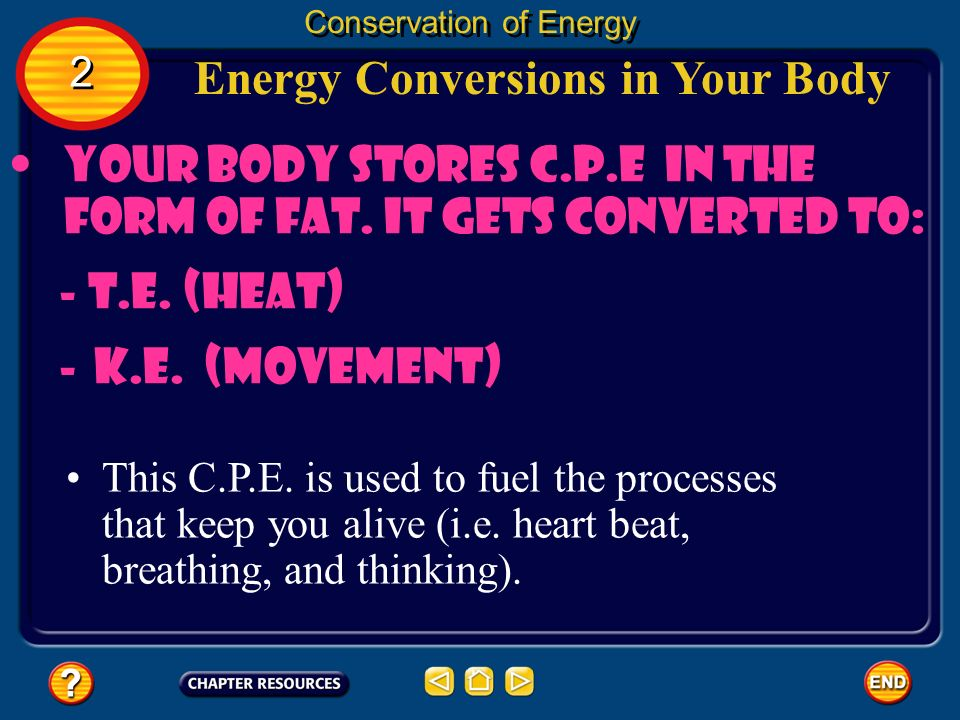 Your body stores C.P.E in the form of fat. It gets converted to: - T.E. (heat) -K.E. (movement) Energy Conversions in Your Body Conservation of Energy