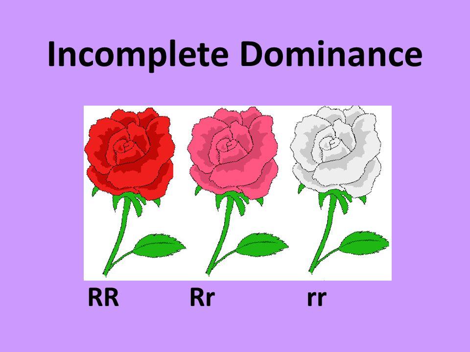 Incomplete Dominance RRRrrr