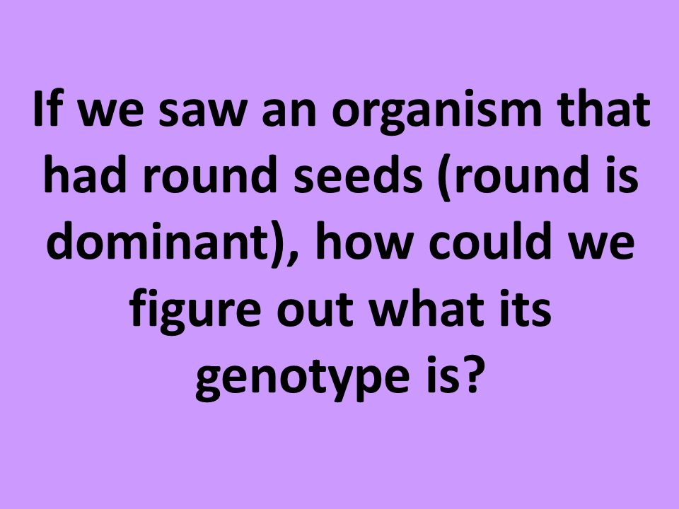 If we saw an organism that had round seeds (round is dominant), how could we figure out what its genotype is?
