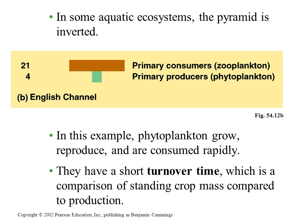 In some aquatic ecosystems, the pyramid is inverted. In this example, phytoplankton grow, reproduce, and are consumed rapidly. They have a short turno