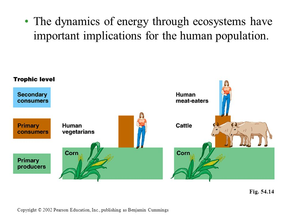 The dynamics of energy through ecosystems have important implications for the human population. Copyright © 2002 Pearson Education, Inc., publishing a