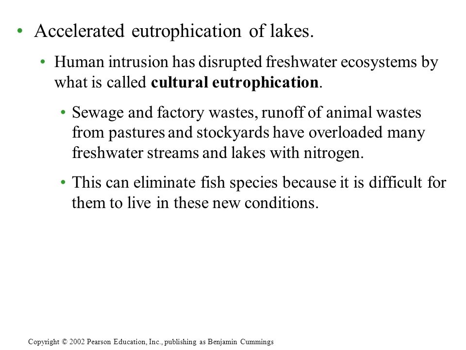 Accelerated eutrophication of lakes. Human intrusion has disrupted freshwater ecosystems by what is called cultural eutrophication. Sewage and factory