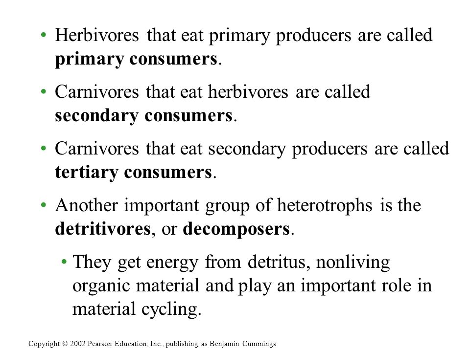 Herbivores that eat primary producers are called primary consumers. Carnivores that eat herbivores are called secondary consumers. Carnivores that eat