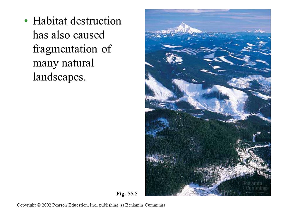 Habitat destruction has also caused fragmentation of many natural landscapes. Copyright © 2002 Pearson Education, Inc., publishing as Benjamin Cumming