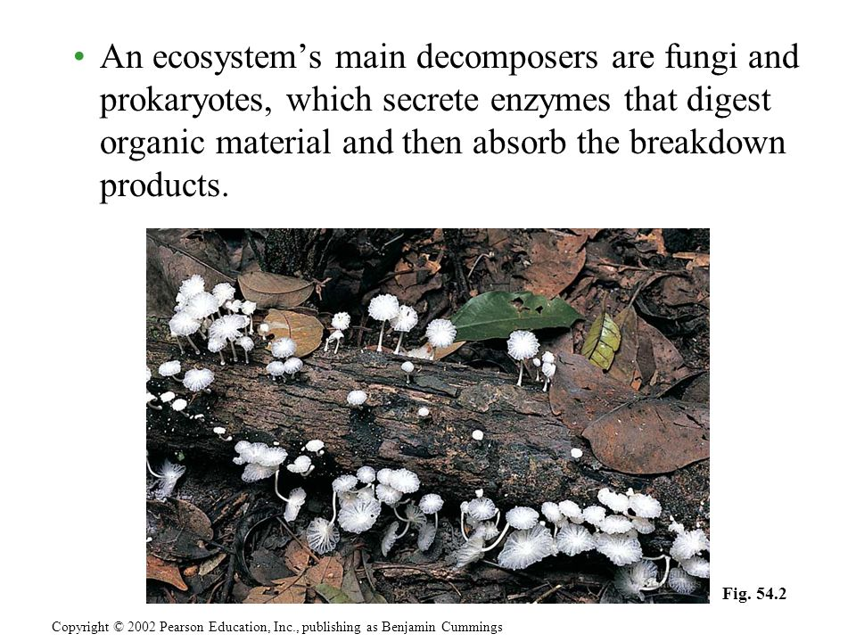 An ecosystems main decomposers are fungi and prokaryotes, which secrete enzymes that digest organic material and then absorb the breakdown products. C