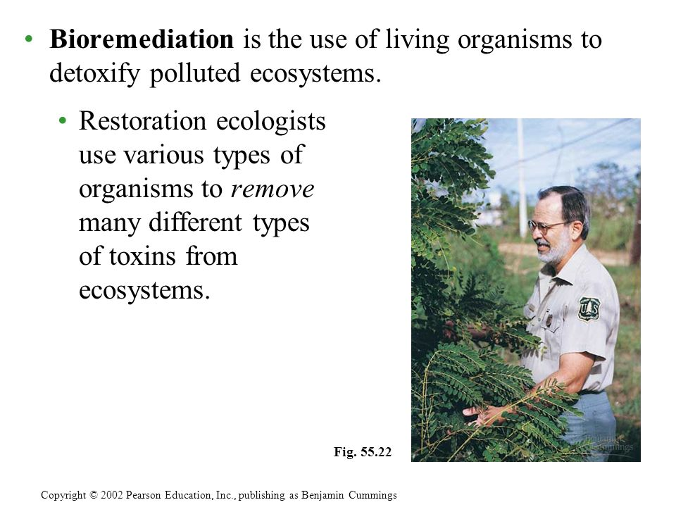 Bioremediation is the use of living organisms to detoxify polluted ecosystems. Restoration ecologists use various types of organisms to remove many di