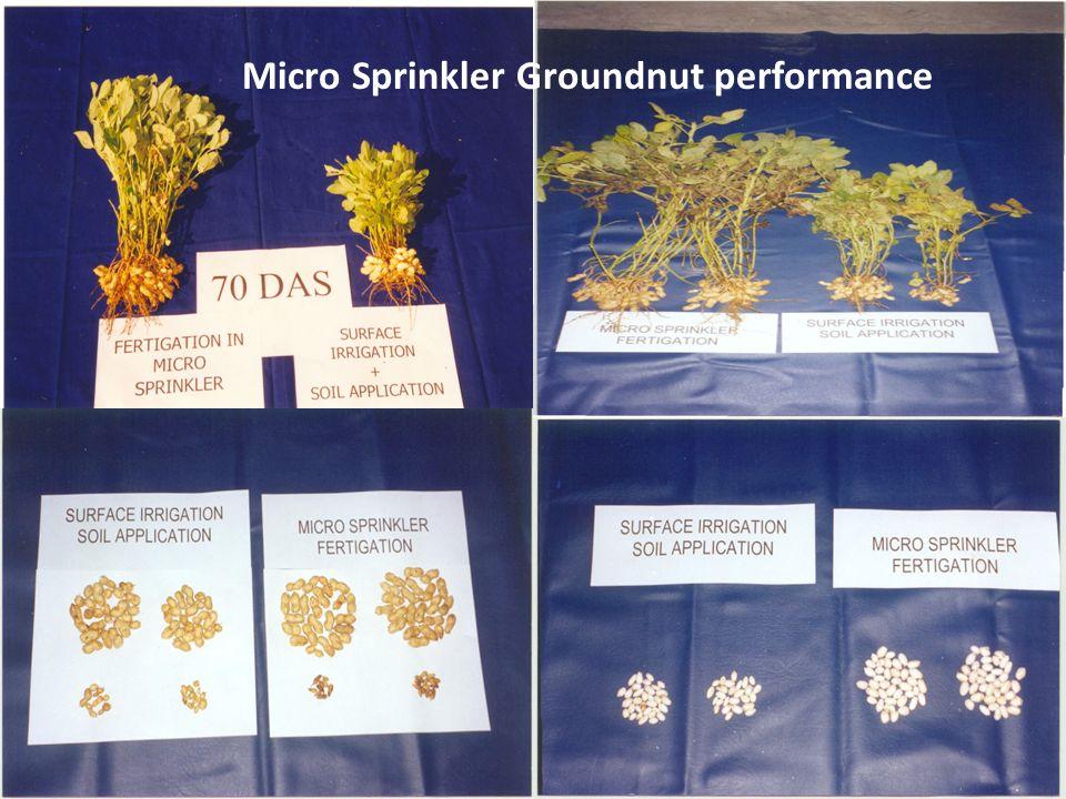 Micro Sprinkler Groundnut performance