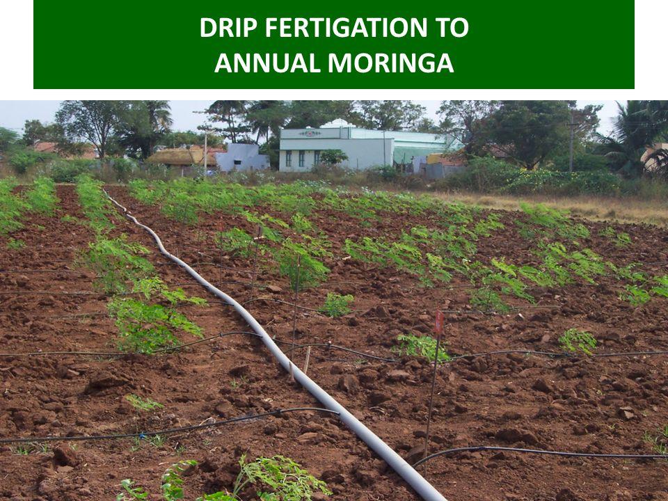 DRIP FERTIGATION TO ANNUAL MORINGA