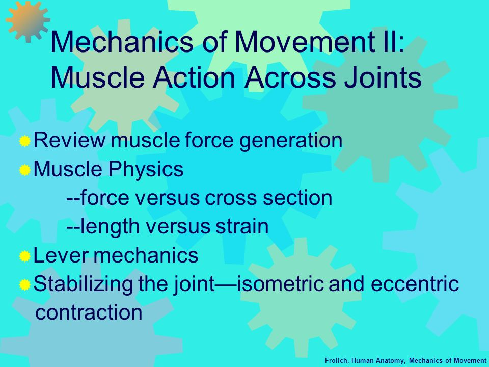 Frolich, Human Anatomy, Mechanics of Movement Mechanics of Movement II: Muscle Action Across Joints Review muscle force generation Muscle Physics --fo