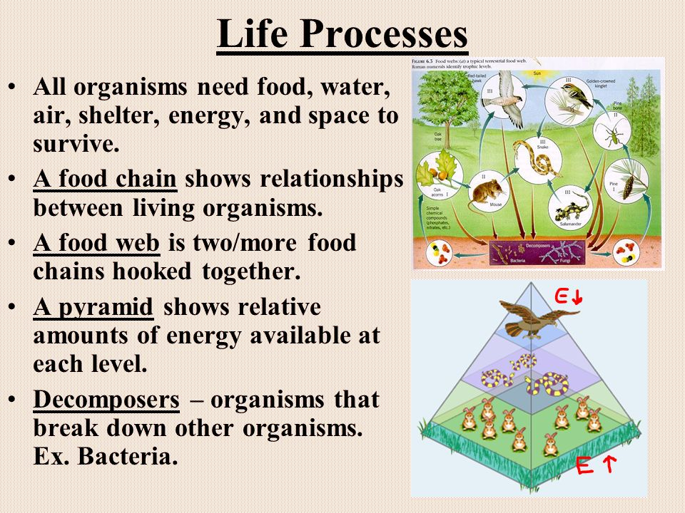 Life Processes All organisms need food, water, air, shelter, energy, and space to survive.