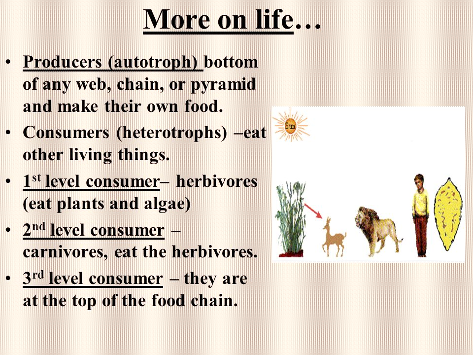 More on life… Producers (autotroph) bottom of any web, chain, or pyramid and make their own food.