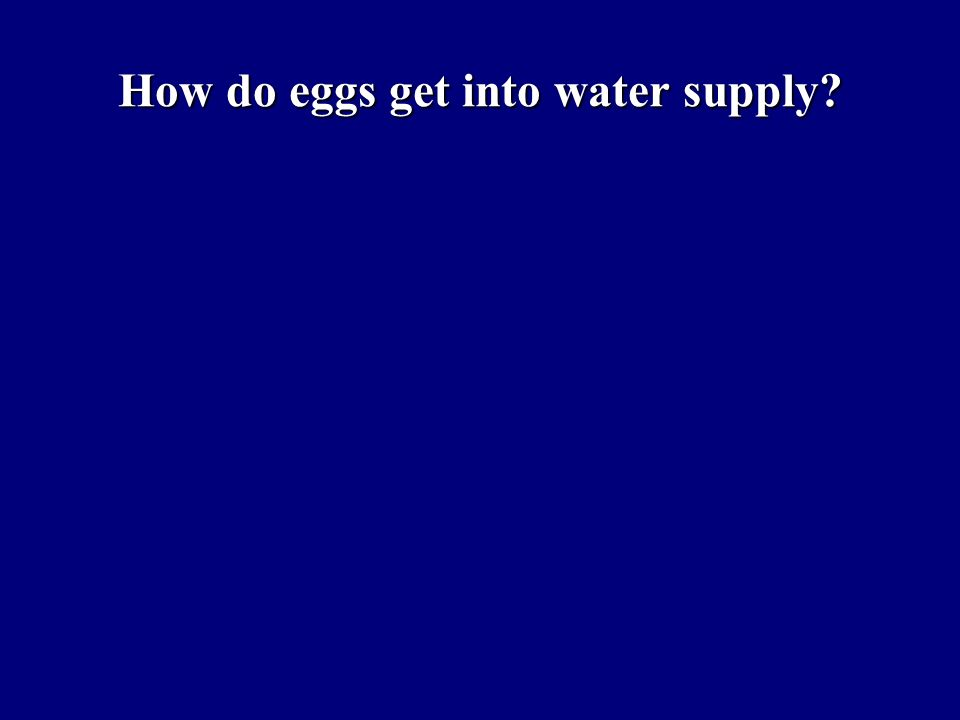 How do eggs get into water supply?