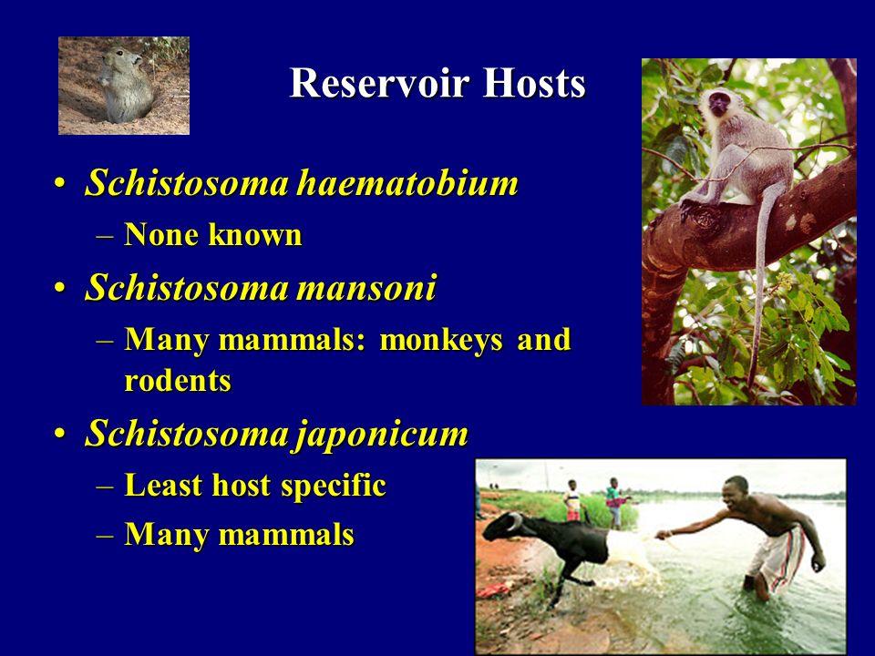 Reservoir Hosts Schistosoma haematobiumSchistosoma haematobium –None known Schistosoma mansoniSchistosoma mansoni –Many mammals: monkeys and rodents S