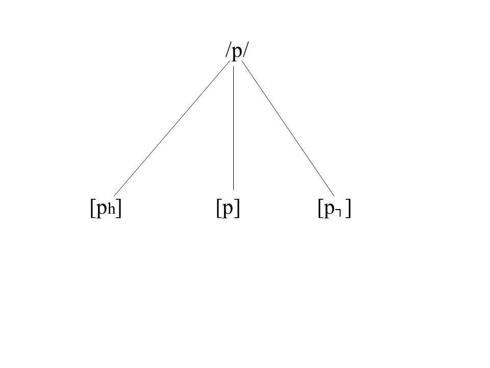 /p/ [p h ] [p] [p ]