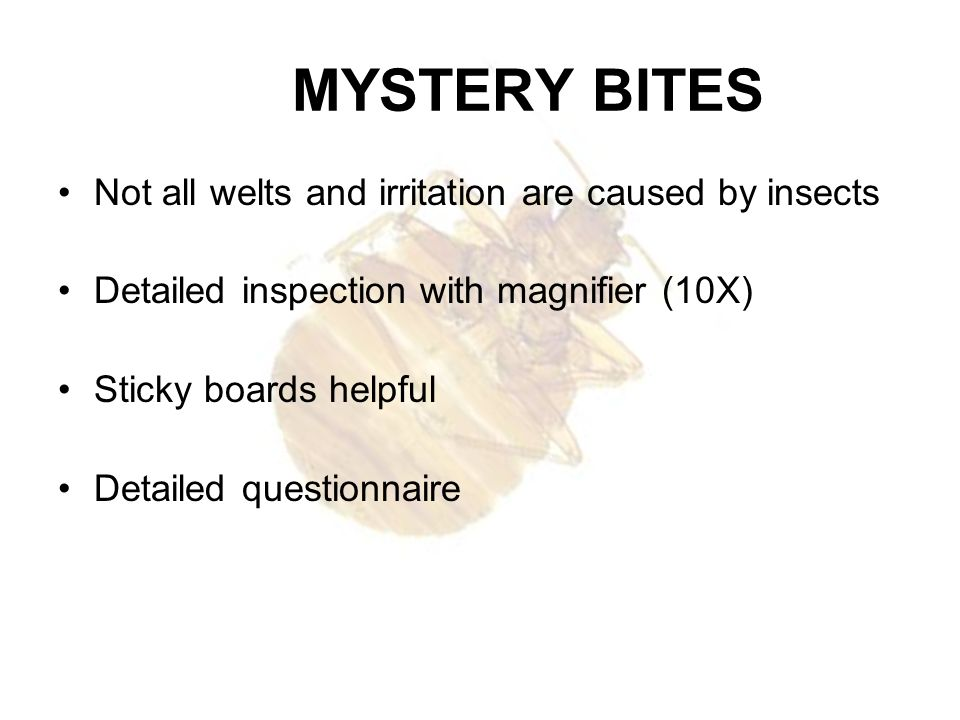 MYSTERY BITES Not all welts and irritation are caused by insects Detailed inspection with magnifier (10X) Sticky boards helpful Detailed questionnaire