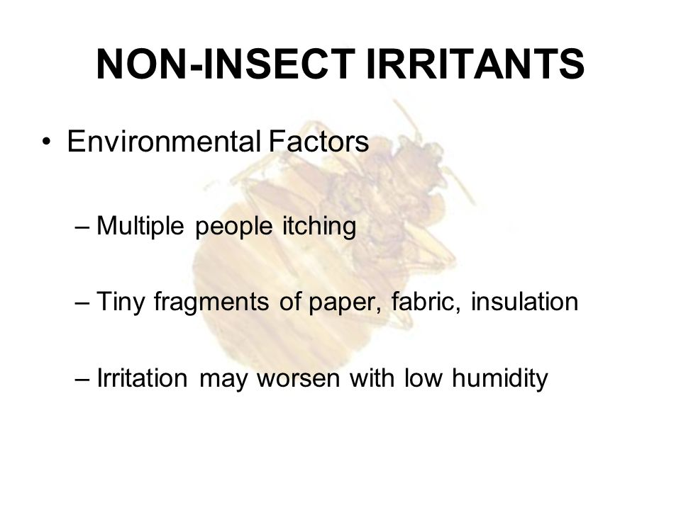 NON-INSECT IRRITANTS Environmental Factors –Multiple people itching –Tiny fragments of paper, fabric, insulation –Irritation may worsen with low humid