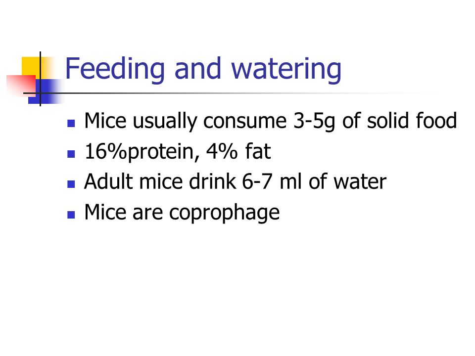 Feeding and watering Mice usually consume 3-5g of solid food 16%protein, 4% fat Adult mice drink 6-7 ml of water Mice are coprophage