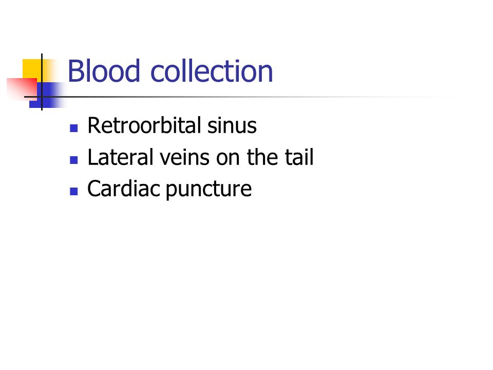 Blood collection Retroorbital sinus Lateral veins on the tail Cardiac puncture