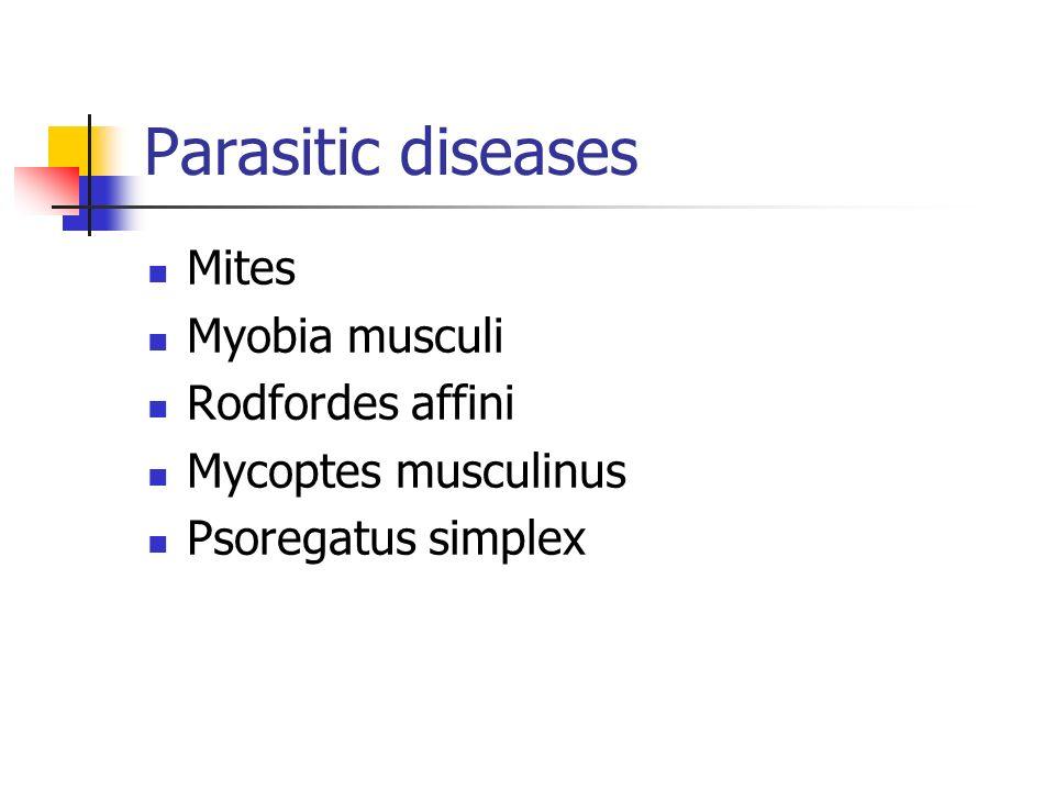 Parasitic diseases Mites Myobia musculi Rodfordes affini Mycoptes musculinus Psoregatus simplex