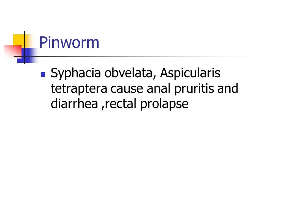Pinworm Syphacia obvelata, Aspicularis tetraptera cause anal pruritis and diarrhea,rectal prolapse