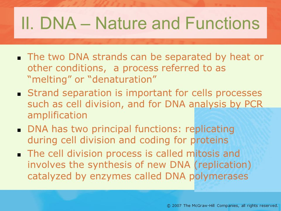 © 2007 The McGraw-Hill Companies, all rights reserved. II. DNA – Nature and Functions The two DNA strands can be separated by heat or other conditions
