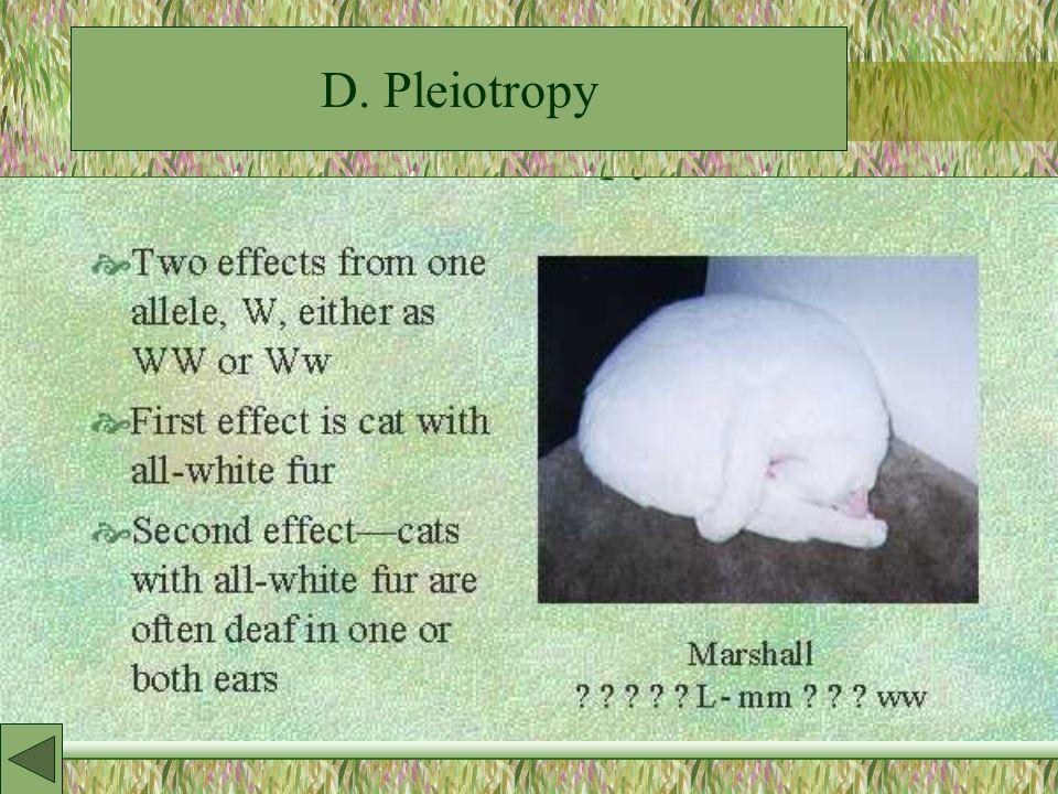 D. Pleiotropy