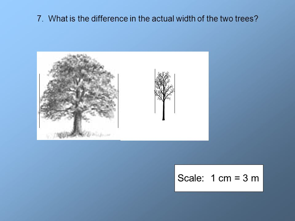 7. What is the difference in the actual width of the two trees? Scale: 1 cm = 3 m