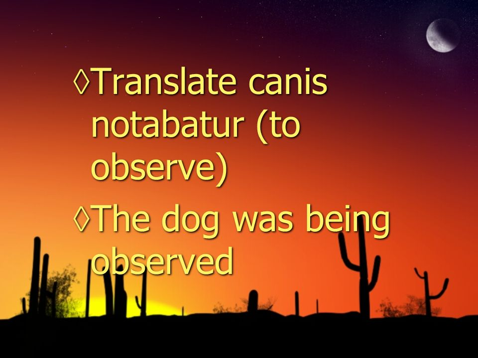 Translate canis notabatur (to observe) The dog was being observed Translate canis notabatur (to observe) The dog was being observed