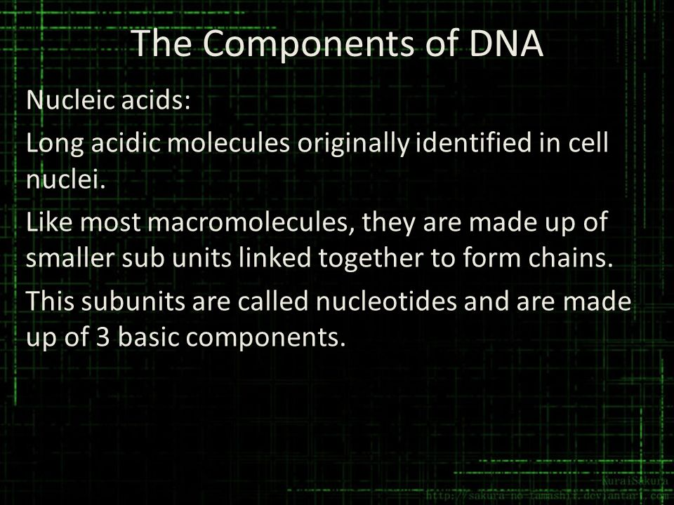 The Components of DNA Nucleic acids: Long acidic molecules originally identified in cell nuclei. Like most macromolecules, they are made up of smaller