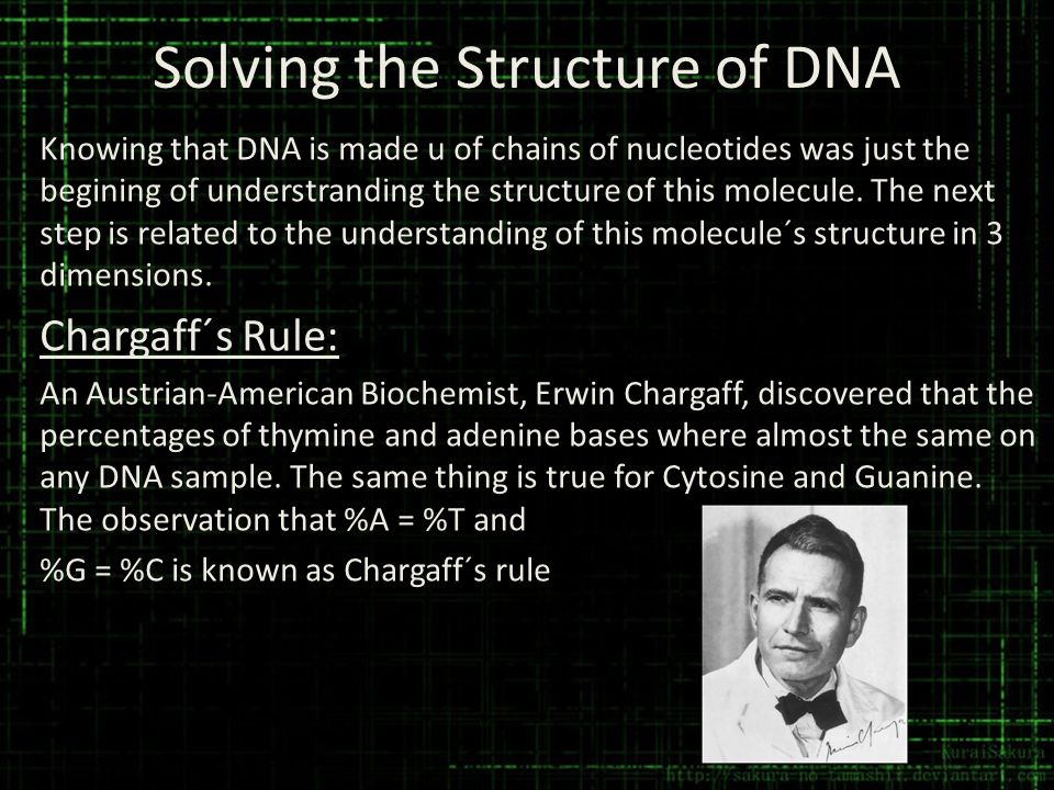 Solving the Structure of DNA Knowing that DNA is made u of chains of nucleotides was just the begining of understranding the structure of this molecul