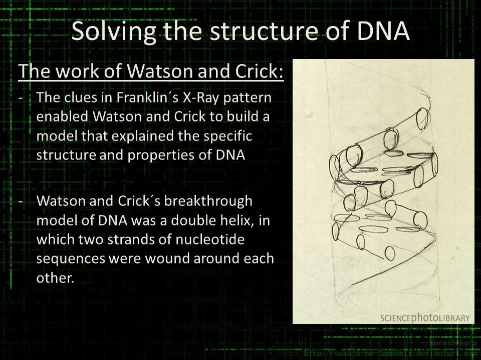 Solving the structure of DNA The work of Watson and Crick: -The clues in Franklin´s X-Ray pattern enabled Watson and Crick to build a model that expla