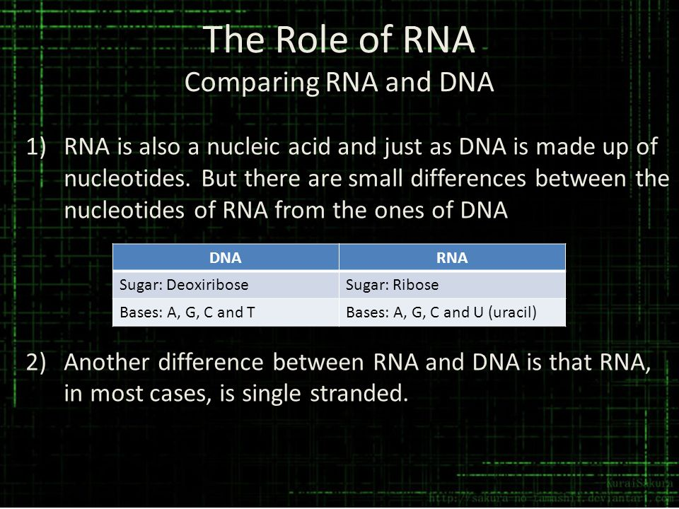 The Role of RNA Comparing RNA and DNA 1)RNA is also a nucleic acid and just as DNA is made up of nucleotides. But there are small differences between