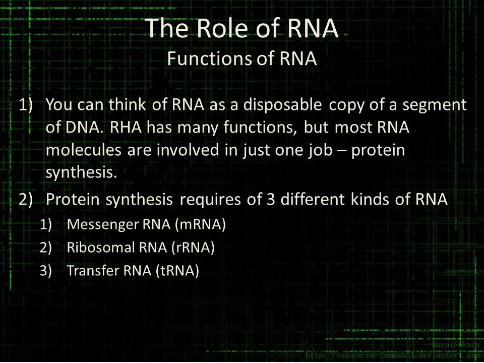 The Role of RNA Functions of RNA 1)You can think of RNA as a disposable copy of a segment of DNA. RHA has many functions, but most RNA molecules are i