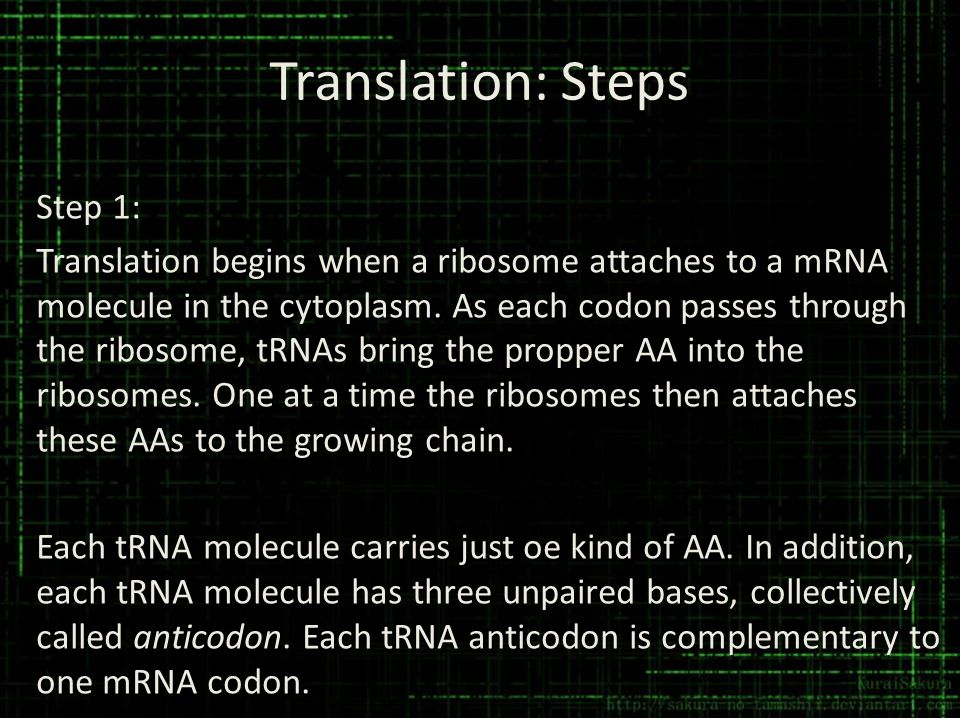 Translation: Steps Step 1: Translation begins when a ribosome attaches to a mRNA molecule in the cytoplasm. As each codon passes through the ribosome,
