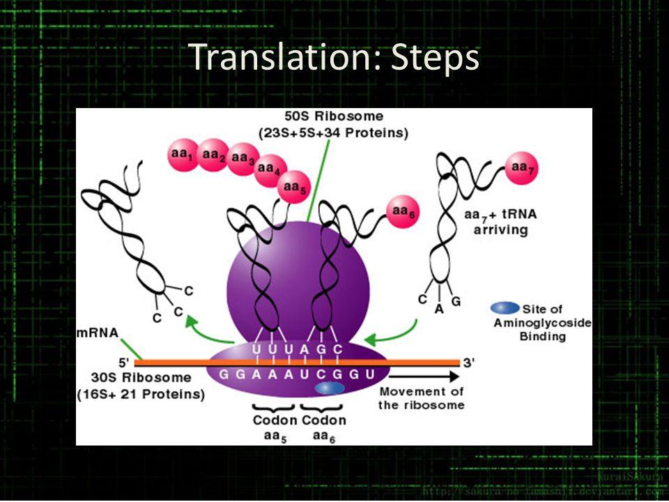 Translation: Steps